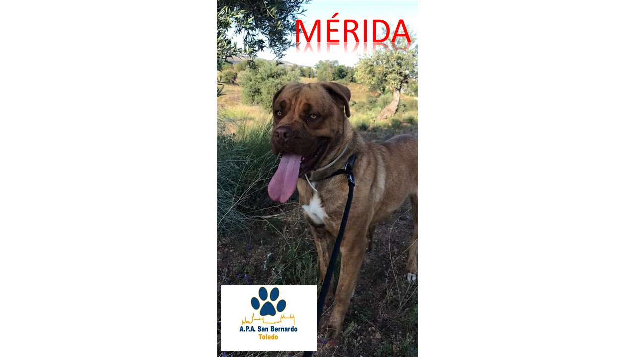 M�RIDA